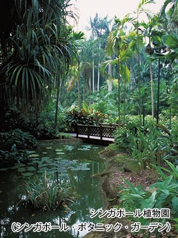 シンガポール植物園(シンガポール・ボタニック・ガーデン)